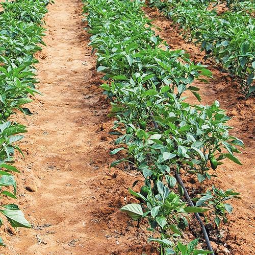 irrigation_01
